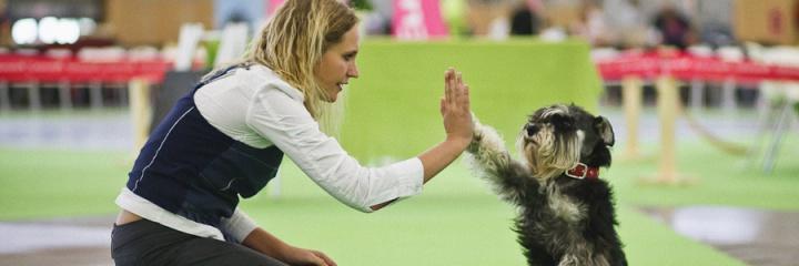Размещение животных во время World Dog Show 2016